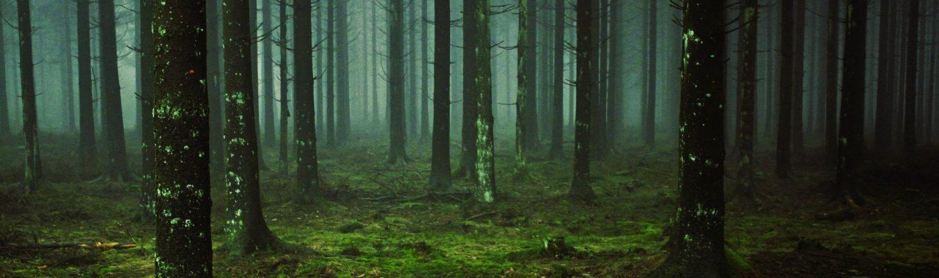 What lies beyond the misty dark wood?
